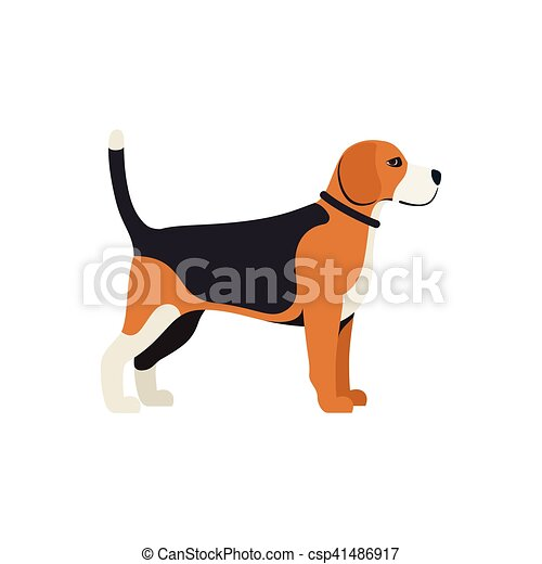 Beagle Dog - Vector color serious dog Beagle breed standing - csp41486917