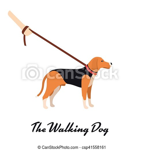 Beagle Dog with a leash - Vector color serious dog Beagle breed on the walk - csp41558161