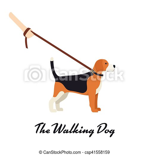 Beagle Dog with a leash - Vector color serious dog Beagle breed on the walk - csp41558159