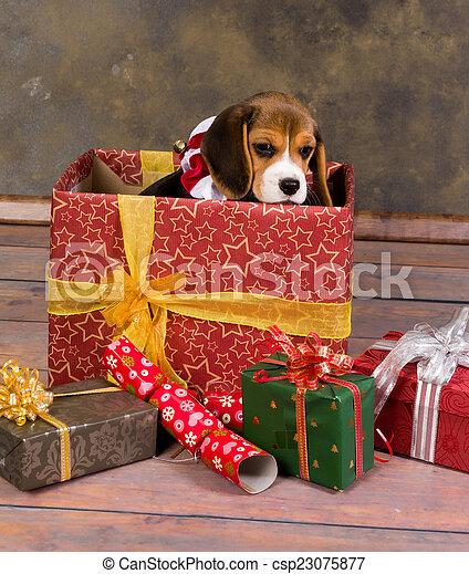 beagle puppy christmas gift csp23075877 - Christmas Beagle