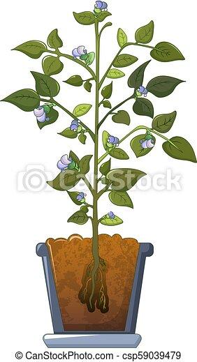 Bean plant flowers icon, cartoon style - csp59039479
