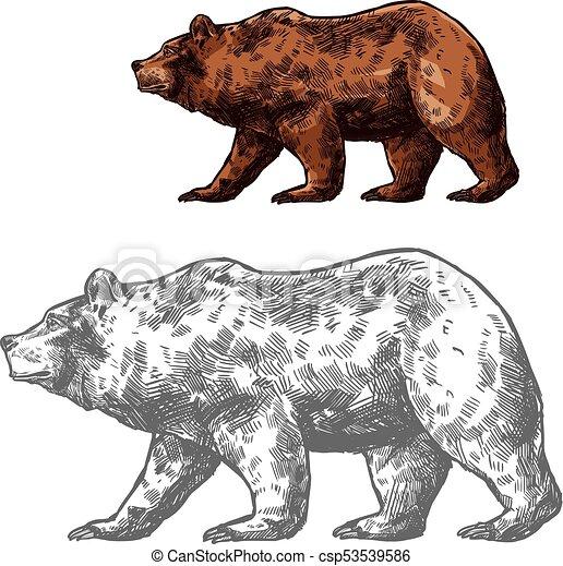 Bear animal sketch of walking brown grizzly. Bear walking ... Walking Bear Drawing