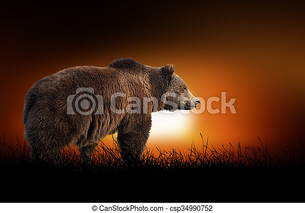 Bear on the background of sunset - csp34990752