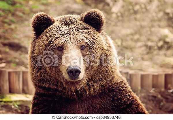 Bear - csp34958746