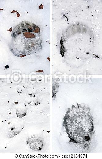 bear tracks in snow - csp12154374
