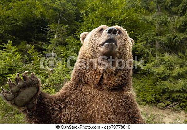 bear with a paw paw in the wild - csp73778810