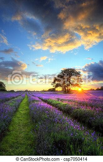 beau, atmosphérique, mûre, vibrant, campagne, champs, image, ciel, lavande, abrutissant, coucher soleil, anglaise, nuages, sur, paysage - csp7050414