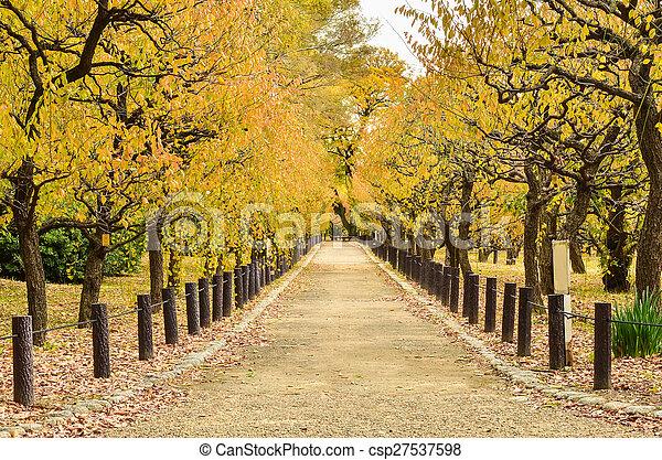 beau, automne, parc, chemin - csp27537598