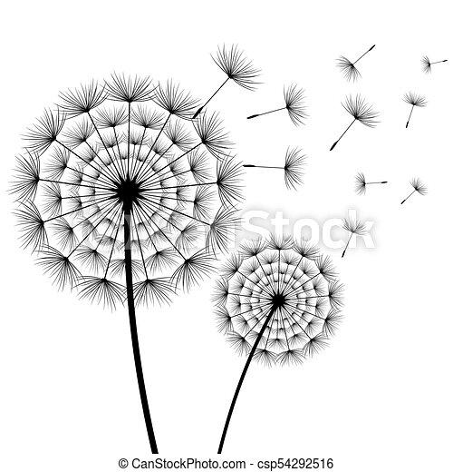 Beau Blanc Pissenlits Noir Fleurs Beau Isolated Printemps