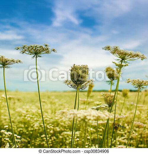 beau, bleu, arrière-plans, automnal, sous, fleurs sauvages, cieux - csp30834906