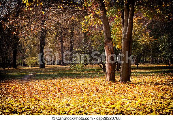 beau, ensoleillé, automne, parc, jour - csp29320768