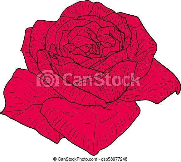 Beau Fleur Croquis Couleur Rose Fond Blanc