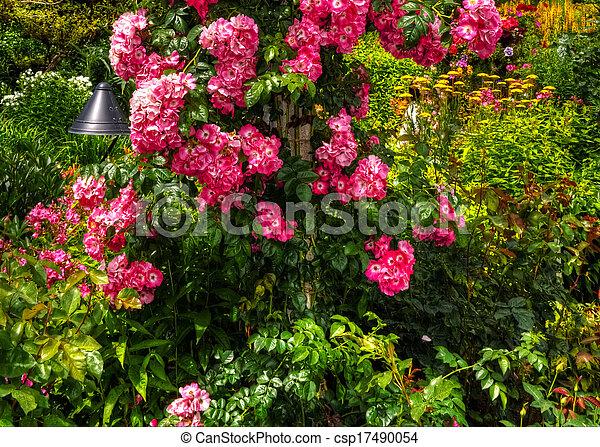 beau, fleur, hdr, jardin - csp17490054