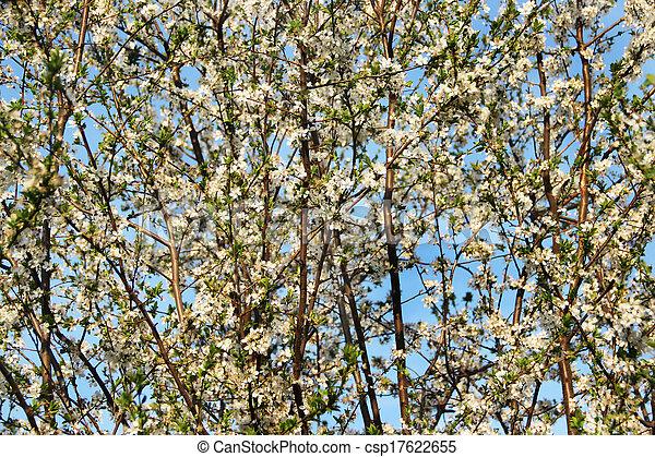 beau, fleurs, fleur, arbres - csp17622655