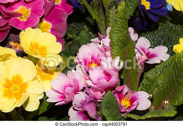 beau, fleurs, fond - csp44053791