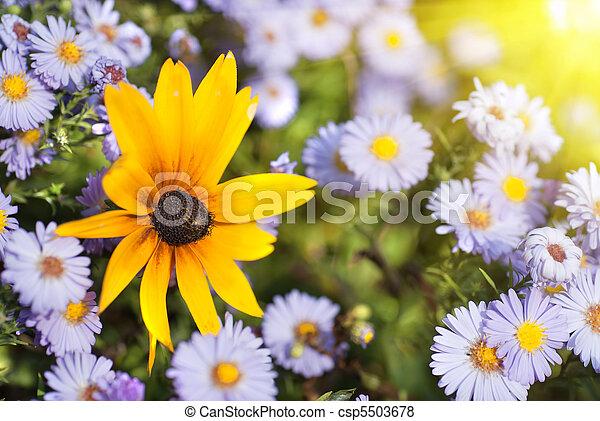 beau, fleurs - csp5503678