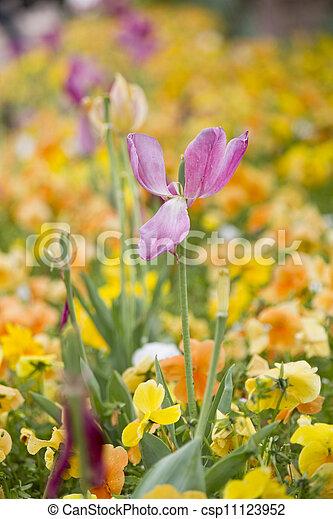beau, fleurs, pièce - csp11123952