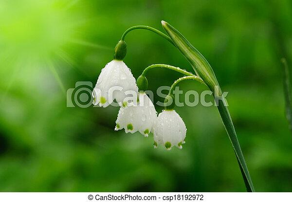 beau, fleurs ressort, fond - csp18192972