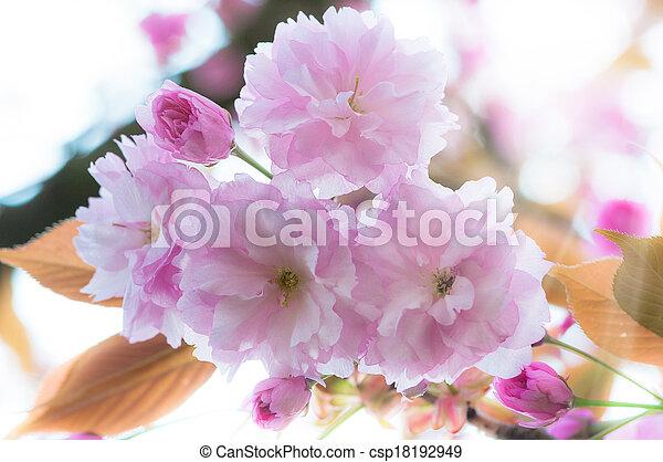 beau, fleurs ressort, fond - csp18192949