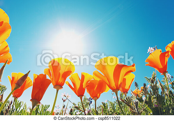 beau, fleurs ressort - csp8511022