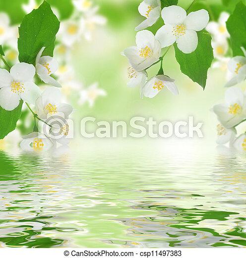 beau, frais, jasmin - csp11497383