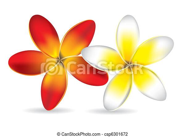 Beau Frangipanier Fleurs Beau Frangipanier Illustration