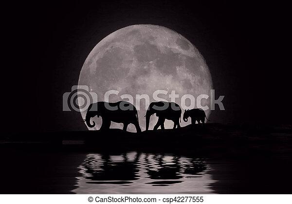 beau, lever lune, africaine, silhouette, éléphants - csp42277555