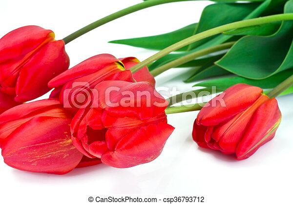 beau, printemps, fond, tulipes, fleurs blanches - csp36793712