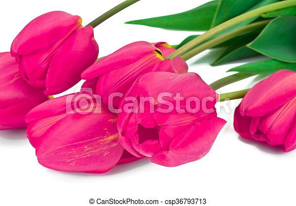 beau, printemps, fond, tulipes, fleurs blanches - csp36793713