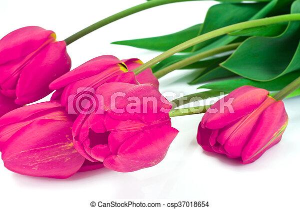 beau, printemps, fond, tulipes, fleurs blanches - csp37018654