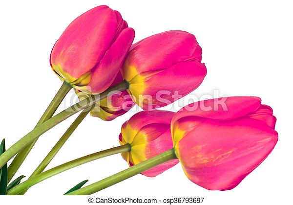 beau, printemps, fond, tulipes, fleurs blanches - csp36793697