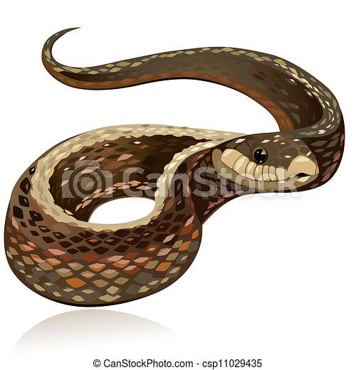 Beau Réaliste Serpent Brun