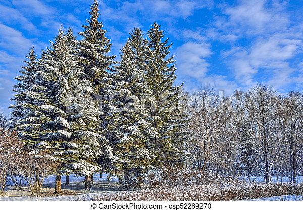 Beau Sapin Neige Couvert Hiver Parc Ville Arbres Paysage