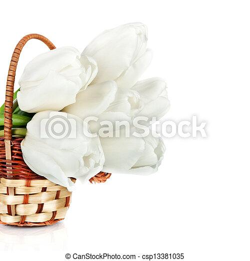 beau, tulipes, blanc, panier, isolé - csp13381035