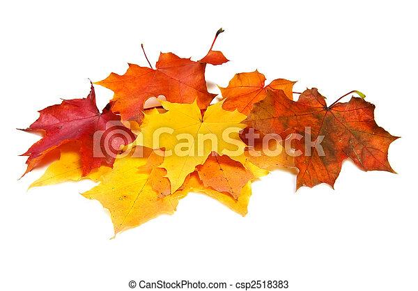 beaucoup, feuilles, coloré, érable, automne - csp2518383