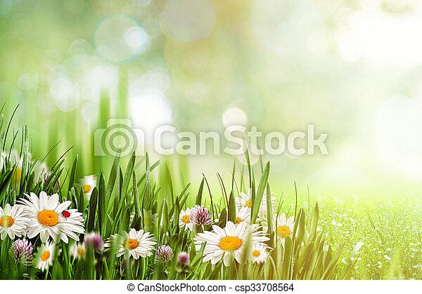 beauté naturelle, arrière-plans, conception, camomille, fleurs, ton - csp33708564
