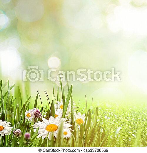 beauté naturelle, arrière-plans, conception, camomille, fleurs, ton - csp33708569