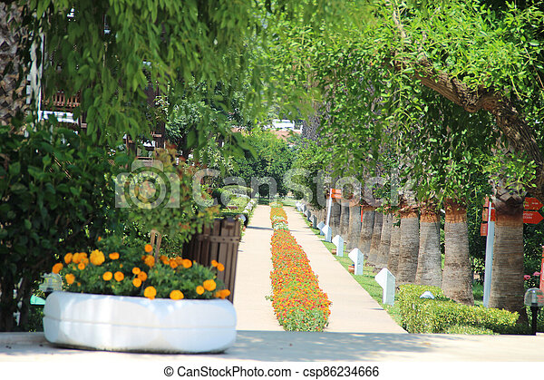 beautiful alley with palm trees in the park - csp86234666