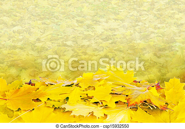 Beautiful autumn background with maple leaves - csp15932550