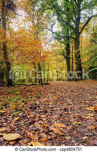 Beautiful Autumn Fall forest scene - csp4804751