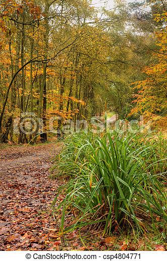 Beautiful Autumn Fall forest scene - csp4804771