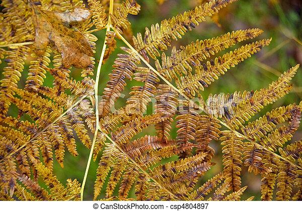 Beautiful Autumn Fall forest scene - csp4804897
