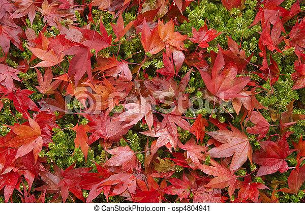 Beautiful Autumn Fall forest scene - csp4804941