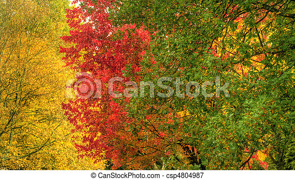 Beautiful Autumn Fall forest scene - csp4804987