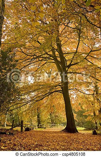 Beautiful Autumn Fall forest scene - csp4805108