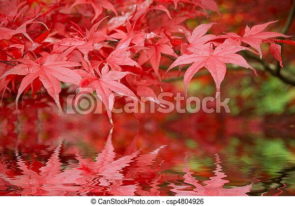Beautiful Autumn Fall forest scene - csp4804926