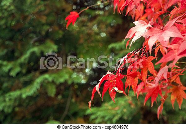 Beautiful Autumn Fall forest scene - csp4804976