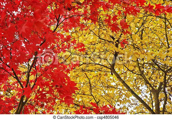 Beautiful Autumn Fall forest scene - csp4805046