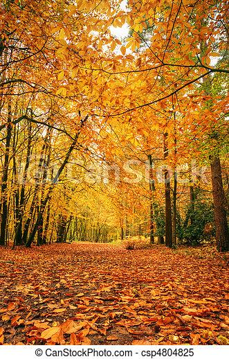 Beautiful Autumn Fall forest scene - csp4804825