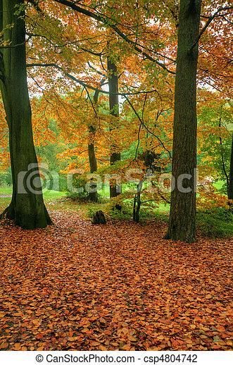 Beautiful Autumn Fall forest scene - csp4804742
